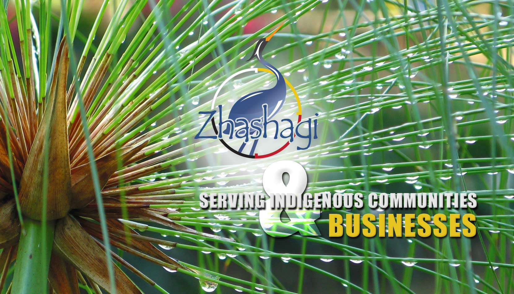 Zhashagi is Serving Indigenous Communities and Businesses